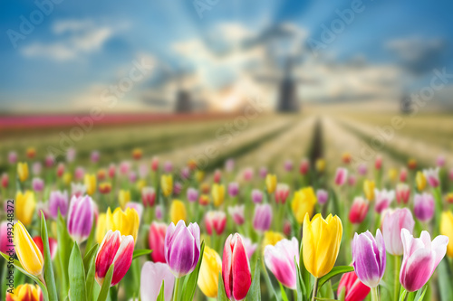 Spring landscape with meadow of tulip Canvas