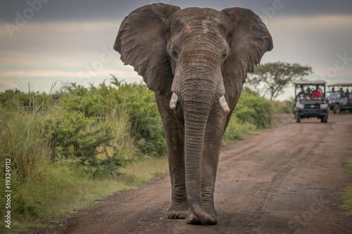 Fototapeta The Mighty Elephant obraz na płótnie