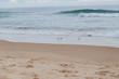 Seagulls walking on the sea shore