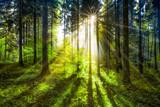 Fototapeta Las - Grüne Waldlichtung im Sonnenlicht