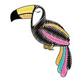 toucan exotic bird icon vector illustration design - 193256555