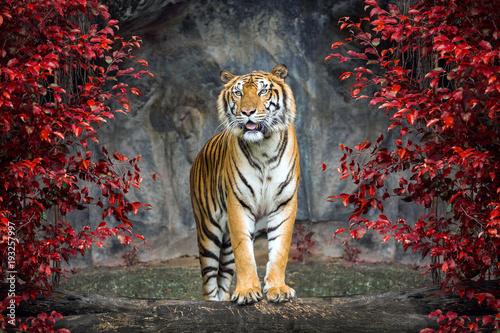 Spoed Foto op Canvas Tijger Portrait of the tiger.