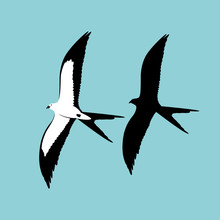 Swallow - Tailed Kite Vector I...