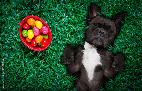 Deurstickers Crazy dog hapy easter dog with eggs