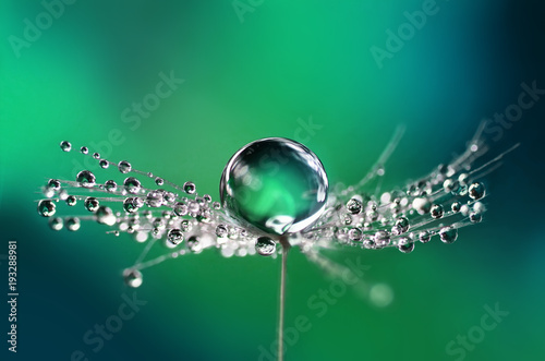 Beautiful water drops on a dandelion seed macro in nature. Beautiful blurred green and blue background. Dew drops on dandelion with free space. Bright colorful dreamy artistic image.