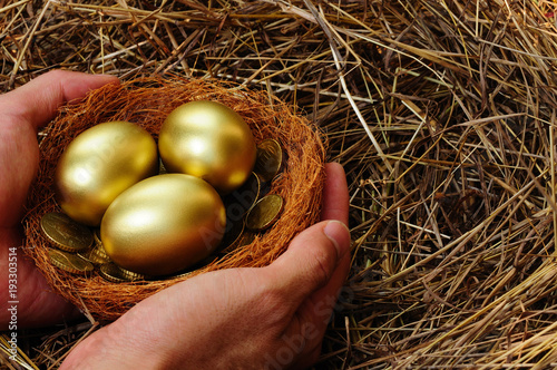 Shiny golden eggs and golden coins in a real bird nest on