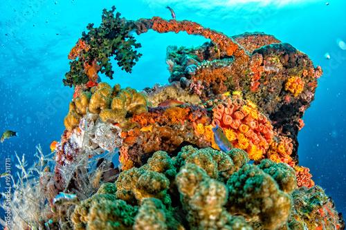Fotografie, Obraz  Ship Wreck in maldives indian ocean