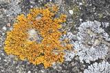 Fototapeta Do akwarium - Mosses and lichens - mchy i porosty