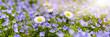 canvas print picture - Frühlingswiese mit Blumen und Sonnenstrahlen