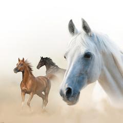 Fototapeta Koń Horses concept