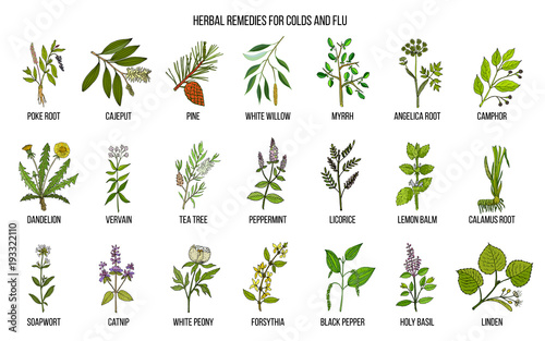 Photo Collection of natural herbs for colds and flu