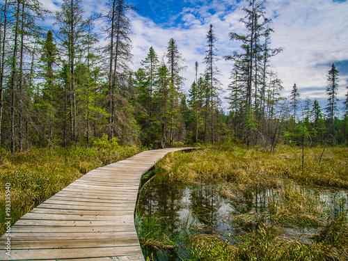 Pathway in Algonquin Park, Canada Wallpaper Mural