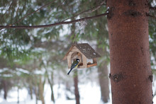 Little Birds In The Bird Feeder In The Winter Snow Forest. Titmouse Sits On A Branch. House For Birds. A Small House In The Forest Under The Snow