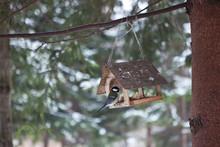 Little Birds In The Bird Feede...