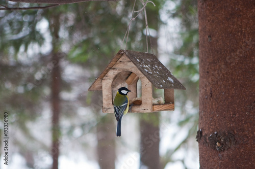 Photo Little birds in the bird feeder in the winter snow forest