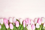 Fototapeta Tulipany - Pink and white tulips border on pink background. Copy space, top view. Holiday background