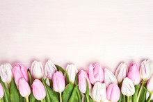 Pink And White Tulips Border O...