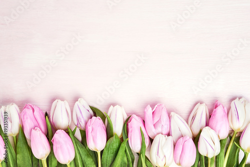 Foto op Aluminium Tulp Pink and white tulips border on pink background. Copy space, top view. Holiday background