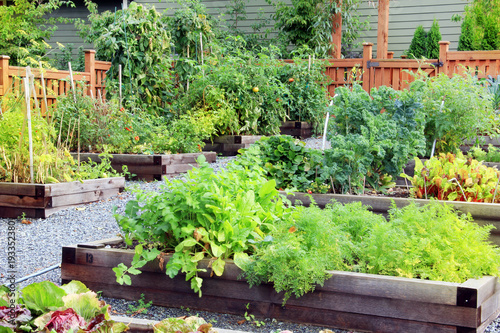 Vegetable and herb garden.