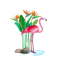 FototapetaTropical pink flamingo bird stands in water and strelitzia exotic flowers and green leaves on backdrop. Vector hand drawn illustration, design elements isolated on white background.