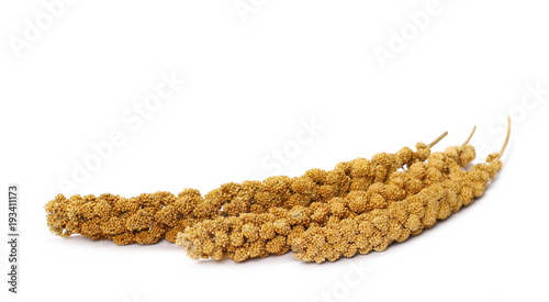 Bird seed, millet stick isolated on white background