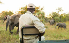 Conservation Tracker Guide Sitting On The Front Of A Safari Vehicle Looking At African Elephants In A Game Reserve