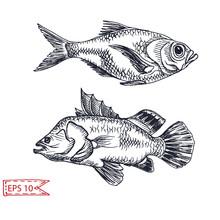 Vector Illustration Sketch - Fish. Hand Drawn Sketsh Card Menu Seafood Restaurant.