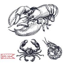 Vector Illustration Sketch - Crab, Shrimp, Lobster. Hand Drawn Sketsh Card Menu Seafood Restaurant.