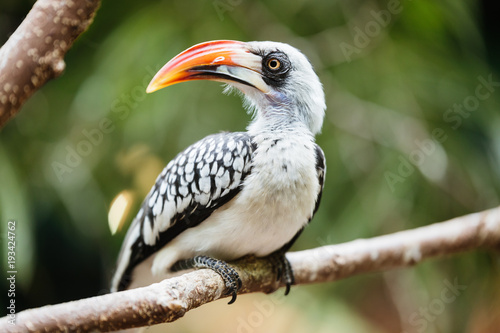 Photo  Yellow billed hornbill sitting on tree