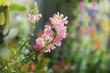 Leinwandbild Motiv beautiful snapdragon flower blooming in garden