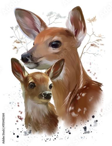 dzikie-zycie-dwie-lanie-jelen-wschodni-akwarela-jelenie