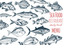 Vector Illustration Sketch - Seafood. Card Menu Restaurant. Vintage Design Template, Banner