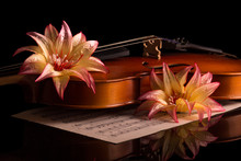 Violin And Bright Flowers Isol...