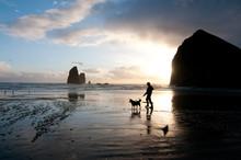 Walking Dog On Cannon Beach