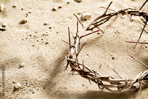 Valokuva Circlet or Crown of Thorns on barren sand