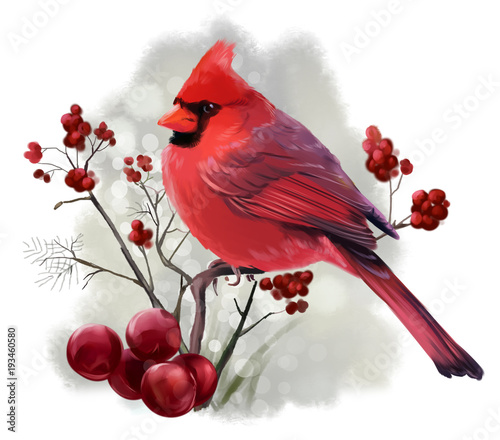 Photo  Bird Cardinal sitting on a branch watercolor illustration