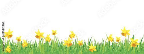 Canvas Print Pretty daffodils for spring