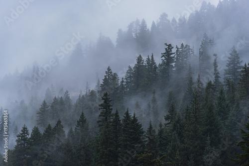 mgliste-drzewa-lesne-w-polnocno-zachodnim-pacyfiku
