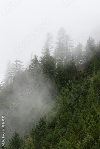 Fototapeten Wald Foggy pacific northwest forest