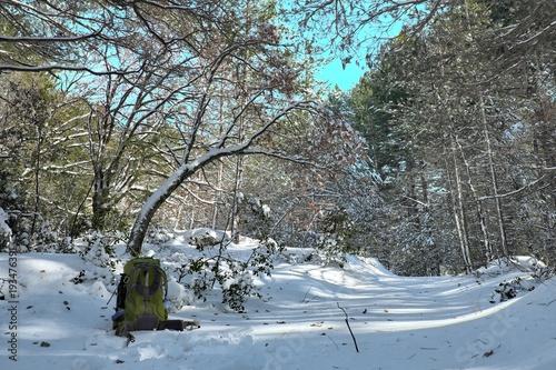 Fényképezés  Green Backpack And Snowy Woods In Etna Park, Sicily