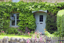 Light Pastel Blue Wooden Doors In An Old Traditional English Lime Stone Cottage Surrounded By Climbing Ivy ,flowering Summer Plants .