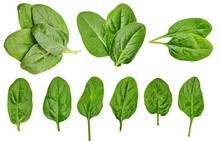 Healthy Diet. Spinach. Greener...