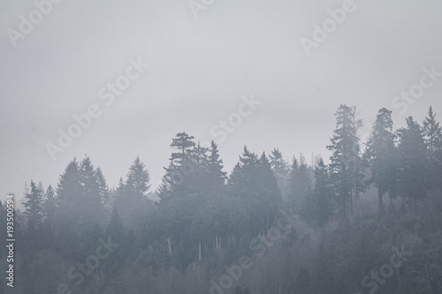 Fotobehang Bossen Foggy + Moody Trees