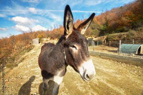 In de dag Ezel donkey closeup