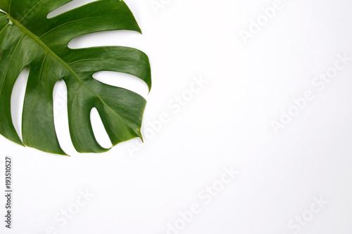 Αφίσα  Tropical palm leaf on white background. Flat lay, top view