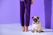 low section view of girl posing with pug dog, ultra violet trend