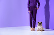 canvas print picture - cropped view of girl posing in purple suit with pug, ultra violet trend