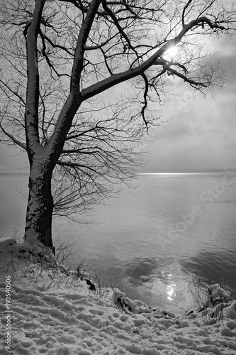 jezioro-zima-z-sylwetka-nagiego-drzewa