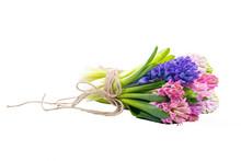 Lilac, Blue, Pink, Raspberry H...