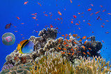 Fototapeta  - Tropical fish on a coral reef